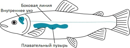 img.fishillustration